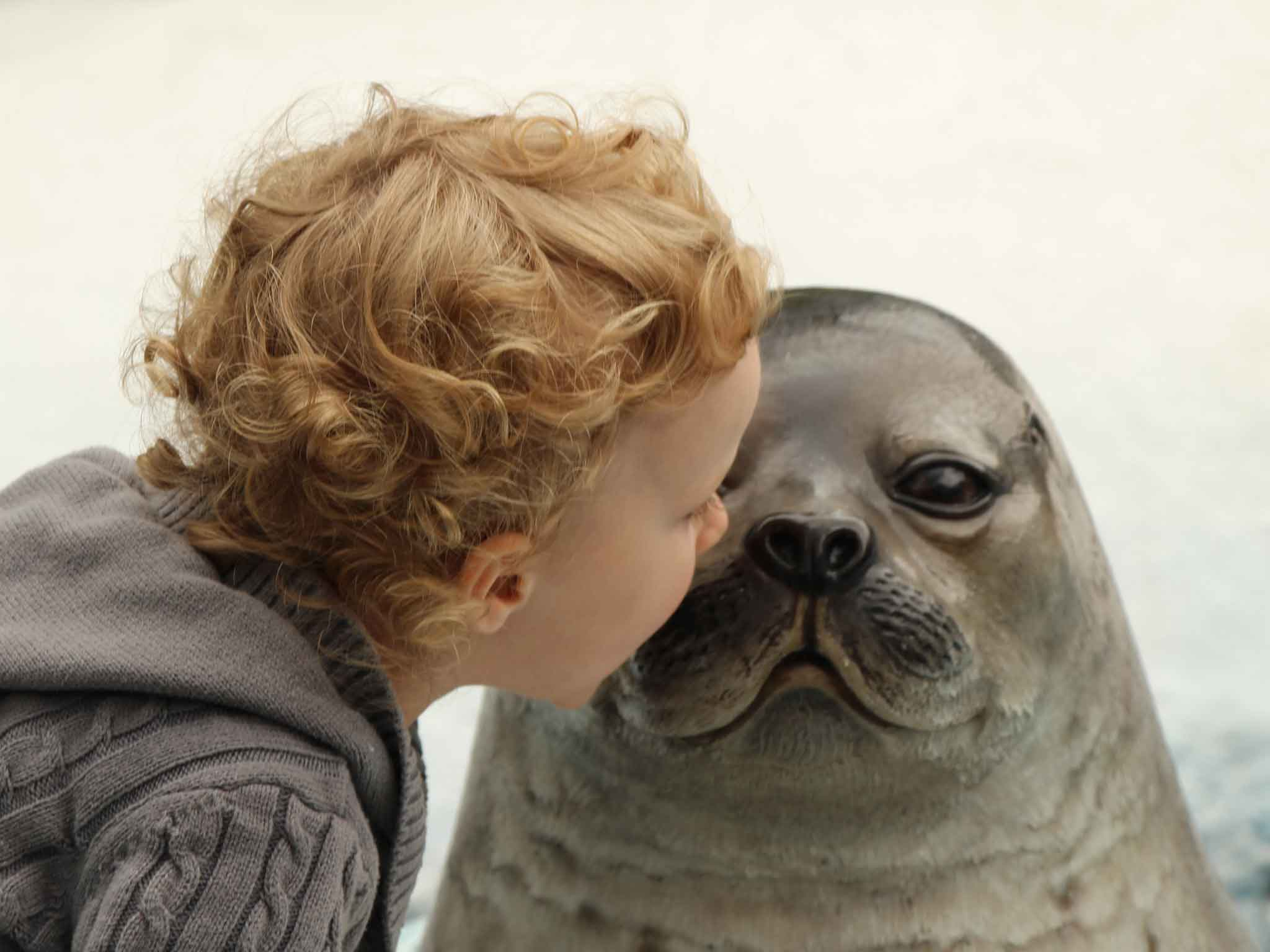 A toddler gets close to a picture of a seal at the San Diego Zoo
