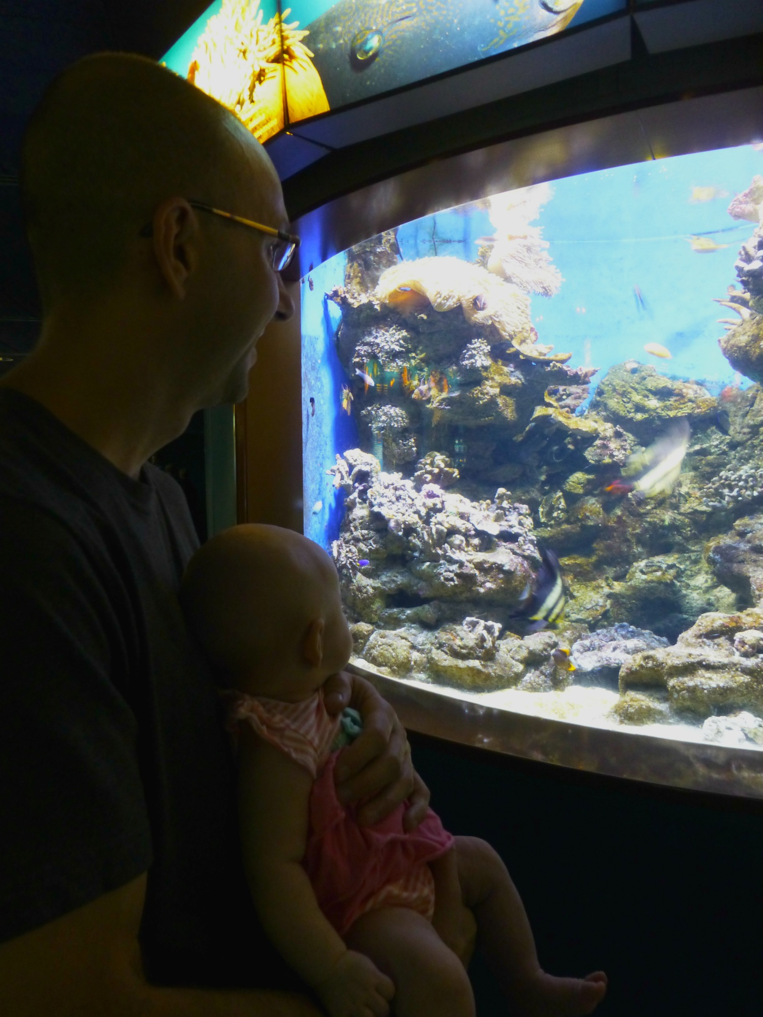 Barcelona aquarium with a baby