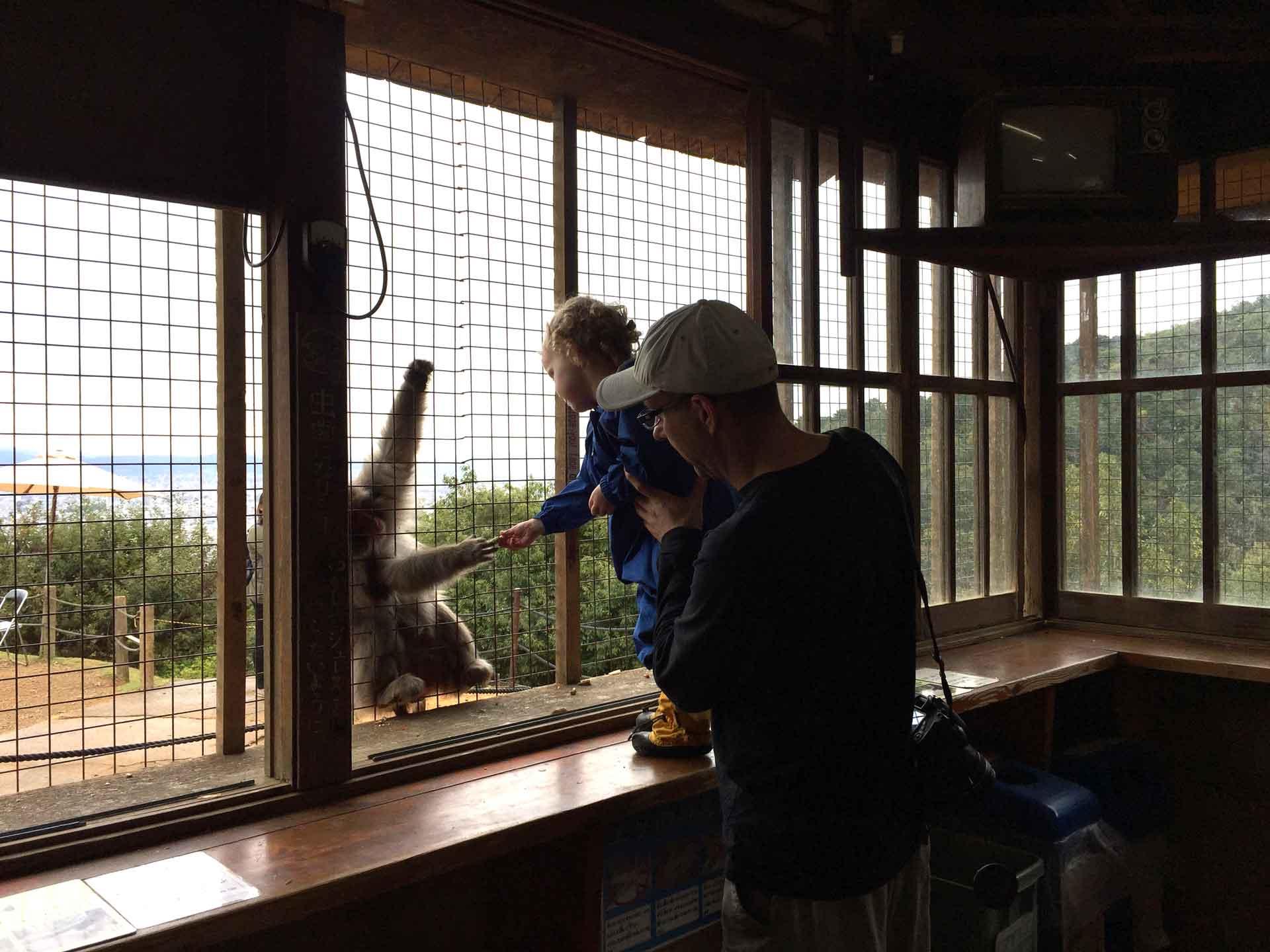 Monkey Park Iwatayama Kyoto with a toddler
