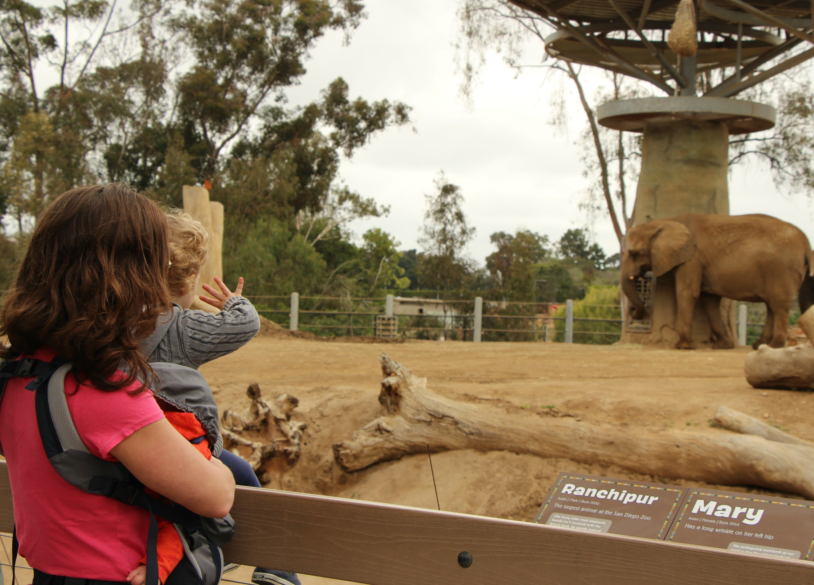 San Diego Zoo with Baby and Toddler - Elephant