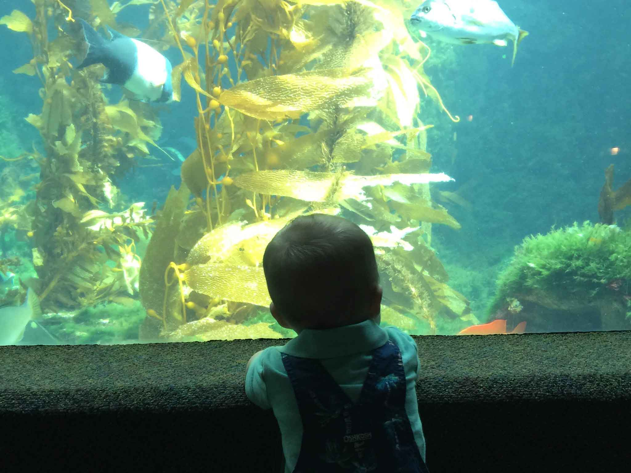 Baby Can Travel - San Diego with a Baby and Toddler - Birch Aquarium Scripps