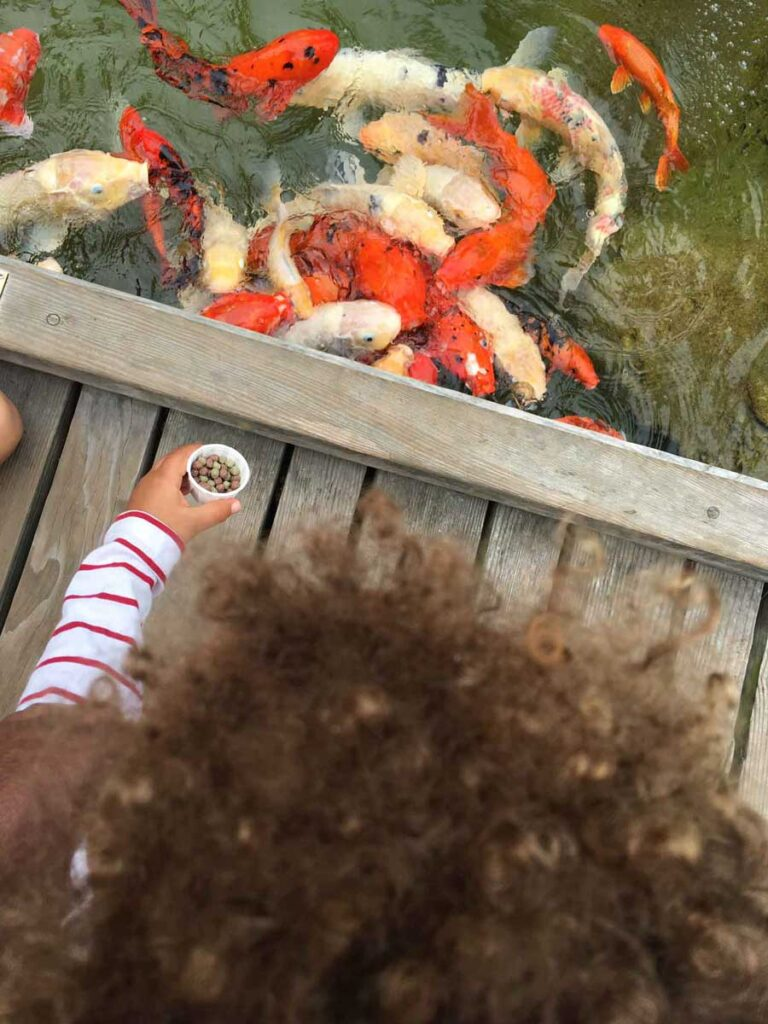toddler feeding fish at Hyatt Huntington Beach