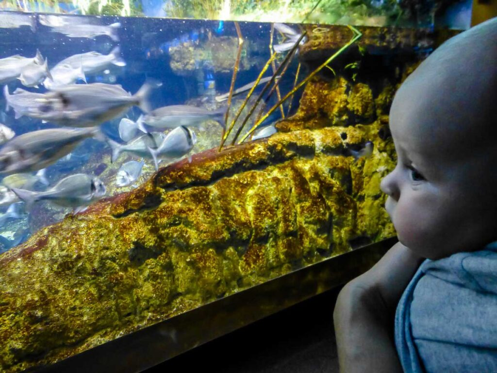 Aquarium in Barcelona with toddler or baby