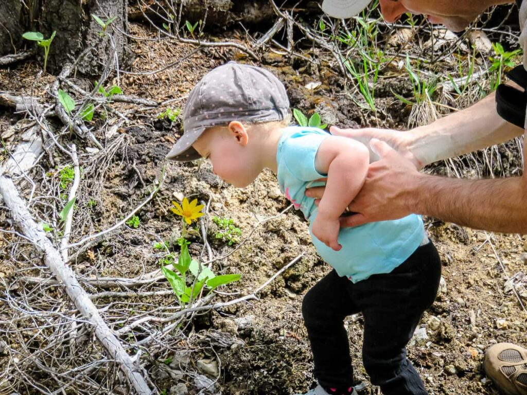 hiking with a 2 year old