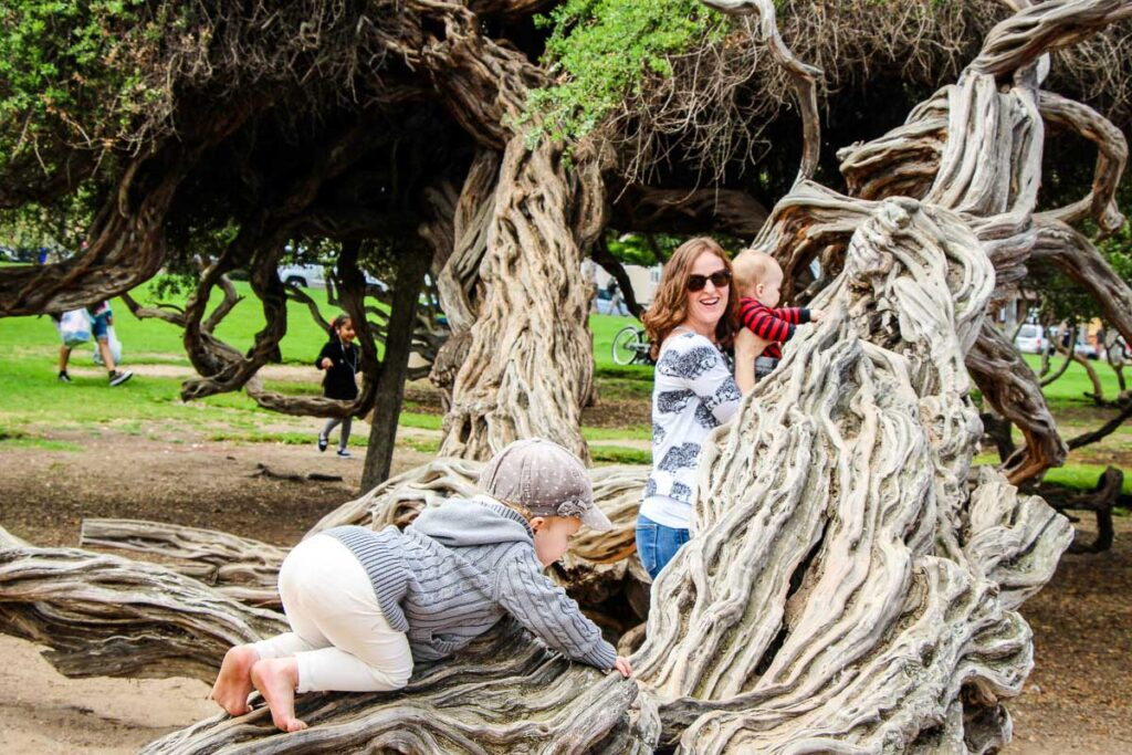 Climbing on trees is a fun activity for a toddler in Ellen Browning Scripps Park in La Jolla, San Diego