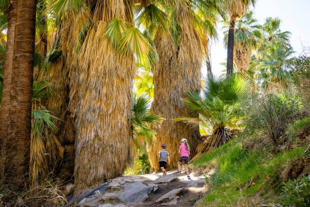 Palm Canyon hike with a toddler
