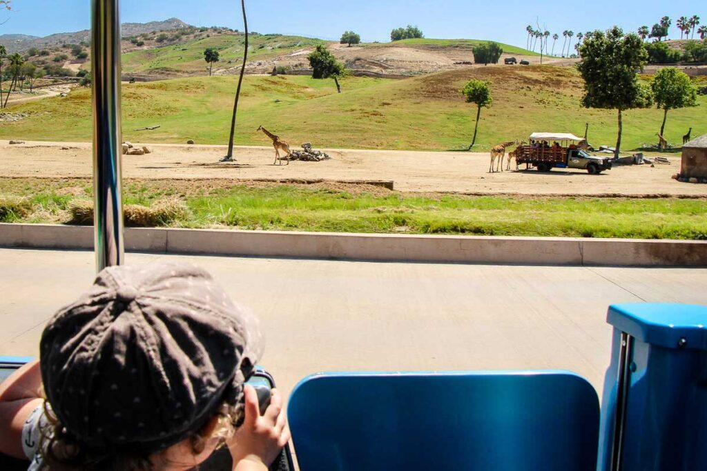 A toddler watching giraffes at the San Diego Safari Park