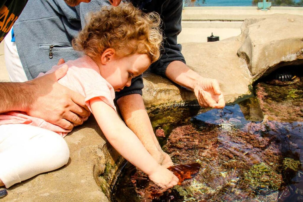 A toddler touches a sea cucumber at the Birch Aquarium in La Jolla