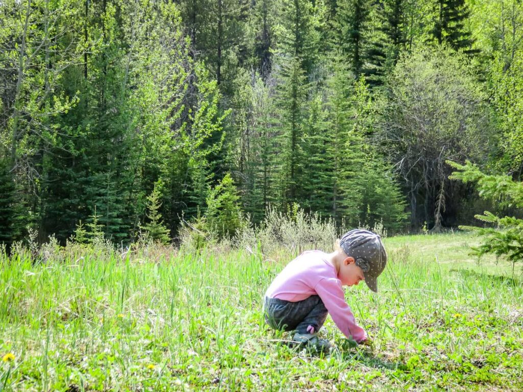 hiking with toddlers - toddler playing in grass