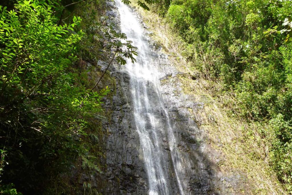 Manoa Falls hike with a baby or toddler