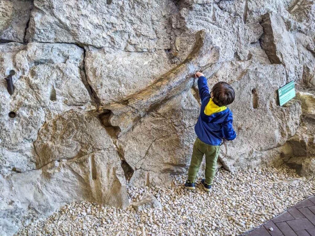 Toddler touching fossil at Dinosaur National Monument